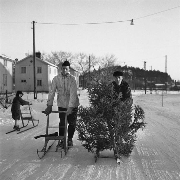 <span><span>Julgranstransport på Norrböle, Skellefteå, år 1951.</span></span>