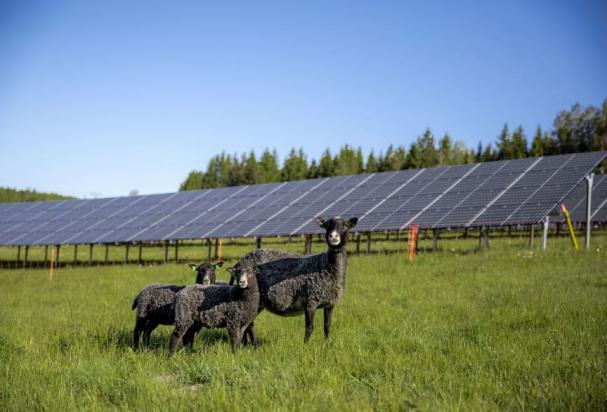 Solhagen i Torphyttan är belägen invid riksväg 50, i en befintlig fårhage.